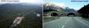 wildlife overpasses in Singapore and Canada